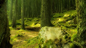 Woroniecki-Forest-Smaller